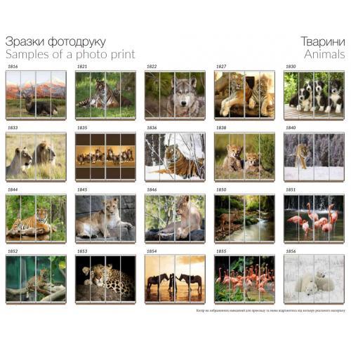 Фасады фотопечать Животные (4 двери)